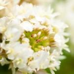 シロツメクサの花言葉は幸福とロマンチックだけど花冠にすると…