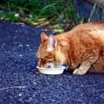 猫の餌皿はどんな物がオススメ?猫の餌皿の選びのポイント