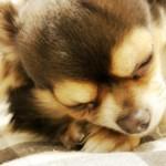 犬のしゃっくりの原因は?犬のしゃっくりを止める方法