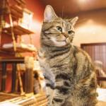 猫にもニキビができる?猫の顎ニキビができる原因と対処法