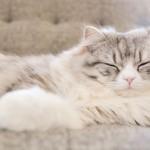 質のよい睡眠とは?睡眠の質を高める方法はあるの?