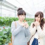 イチゴ狩り2016愛知県で予約なしで行ける場所はココ!