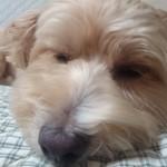 犬の夏バテの症状は下痢や嘔吐?夏バテ対策をしっかりとしよう