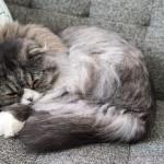 猫の写真を撮るときにフラッシュは使わないで!危険な理由とフラッシュを使わないで写真を撮る方法