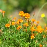 ガーデニング初心者でも育てやすい夏の花オススメ8つ