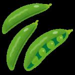 スナップエンドウのプランターでの栽培方法は?種まきの時期はいつ?