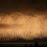 柏崎花火大会2016の日程は?穴場スポットや駐車場はある?