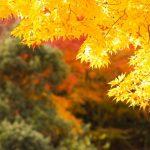箱根の紅葉2016の見頃の時期とオススメスポット5選
