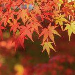 鎌倉の紅葉2016おすすめスポット5選!ライトアップの名所と見頃は?