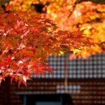勝尾寺の紅葉2016の見頃やライトアップの時間は?駐車場はある?