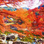 香嵐渓の紅葉2016見頃とライトアップの期間は?渋滞を回避するには