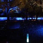 青蓮院門跡の紅葉の見頃とライトアップの時間は?アクセス方法や駐車場情報