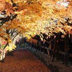 東福寺の紅葉2016の見頃の時期は?ライトアップの時間や混雑状況について
