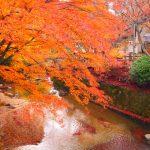 岩屋堂公園の紅葉2016の見頃やライトアップはある?渋滞や混雑状況は?