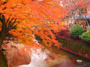 岩屋堂公園の紅葉