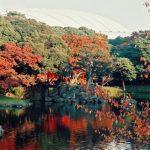 小石川後楽園の紅葉2016の見頃やライトアップはある?駐車場情報