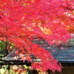 白鳥庭園の紅葉2016見頃とライトアップの日程は?駐車場情報