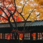 本土寺の紅葉2016の見頃は?アクセス方法と駐車場情報