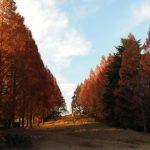 昭和記念公園の紅葉2016の見頃やライトアップはある?オススメスポットはコチラ